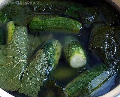 http://www.kuharka.ru/_foto/img/1120498136.jpg
