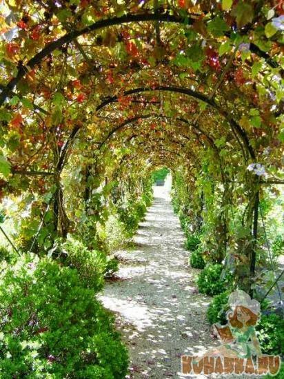 арки под виноград своими руками